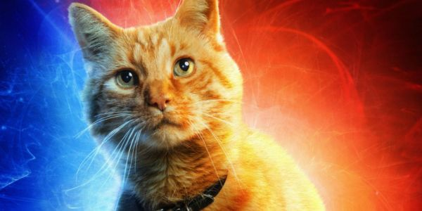 Captain Marvel Salutes Goose the Cat for Love Your Pet Day