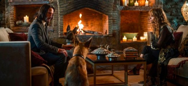 'John Wick Chapter 3' Created Its Own Attack Dogs, Trained By Halle Berry