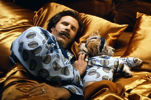 Will Ferrell Is the Best Tiny Dog Actor of Our Generation
