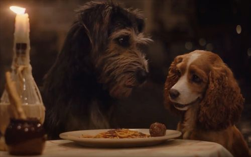 New Lady and the Tramp Trailer for the Disney+ Movie