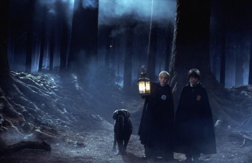 Harry Potter: 10 Things About the Forbidden Forest The Books Leave Out