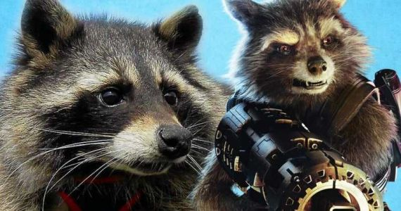 Rocket Raccoon: 10 Off-Set Facts About The Making Of This Character In The MCU
