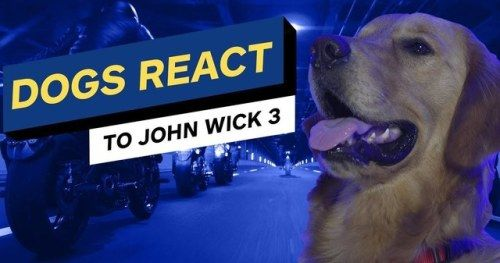 Dogs Reacting to John Wick 3 Trailer Is the Best Thing