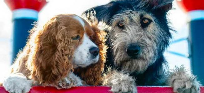 'Lady and the Tramp' Trailer: Watch Those Doggone Doggos Fall in Love in Live-Action