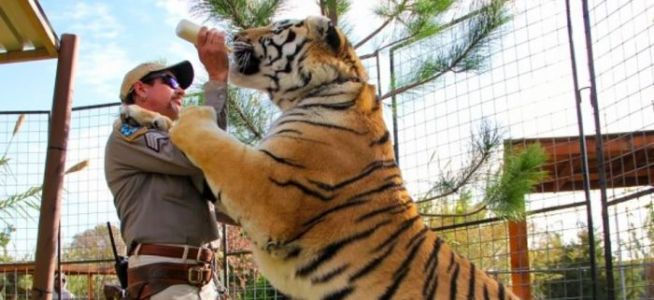 "Fox Airing New 'Tiger King' Special From TMZ, and Joe Exotic's Abused Tigers Are Now ""Happier"" at a Sanctuary"
