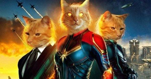 Goose the Cat Wants to Steal Your Heart in Captain Marvel