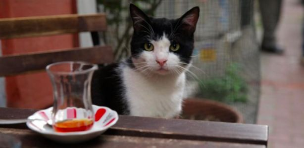 The Quarantine Stream: Meet the Many Stray Cats of Istanbul in the Charming Documentary 'Kedi'