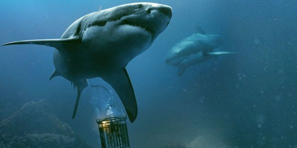 47 Meters Down Sequel Will Be 'The Descent Underwater'