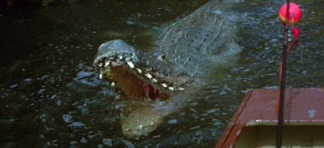 'Crawl' Footage Traps You in a Flooded House With Alligators