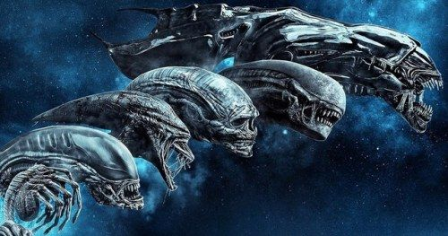 More Alien Movies Are Being Discussed at Disney Confirms Ridley