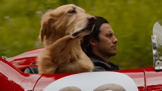 See Kevin Costner Voice This Dog In The ART OF RACING IN THE RAIN Trailer