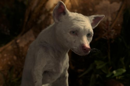 'Mowgli: Legend of the Jungle': Bhoot's Death Will Ruin Your Holidays