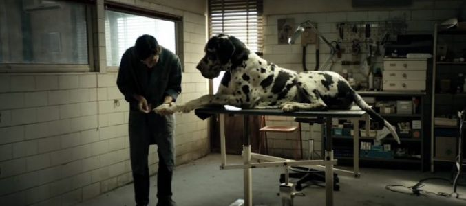 'Dogman' Review: A Morality Tale We Deserve