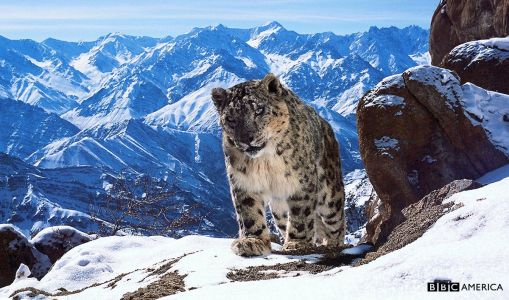 10 Best Nature Documentaries On Netflix