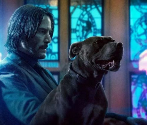 John Wick 3 Movie - John Wick and Good Dog - National Puppy Day