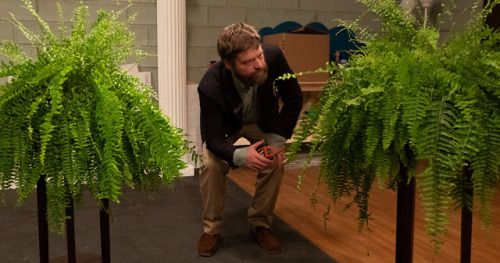 Between Two Ferns: The Movie First Look Has Zach Galifianakis