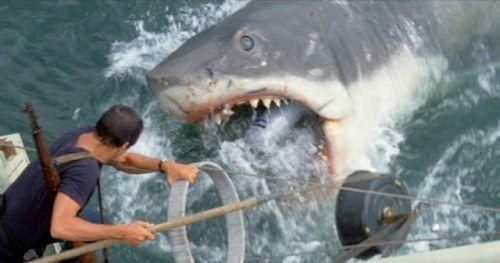 I Watched Jaws on the Water on Friday the 13thSteven